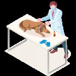 New York Preventive Care for pets Icon