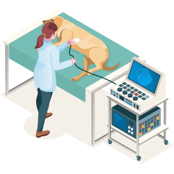 Getting a ultrasound helps to give a more detailed diagnostic of your pets health