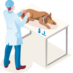 Dog and Cat vaccinations icon