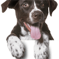 Footer dog icon